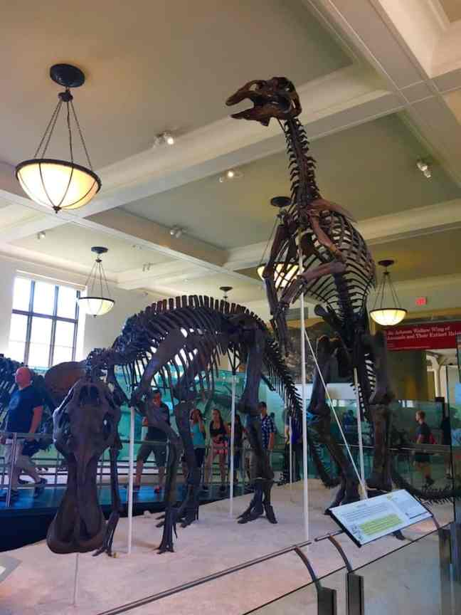 Tour the Natural History Museum during your 4 day NYC itinerary.