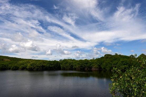 Levera Mangrove Wetland