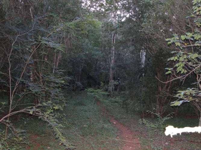 Bosque de Ensuenos Trail at Loma Charco Azul Biological Reserve