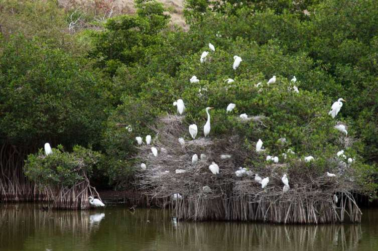 egret-nesting-colony