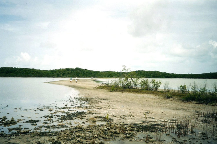 Wetlands on Cat Island (Photo by Carolyn Wardle)