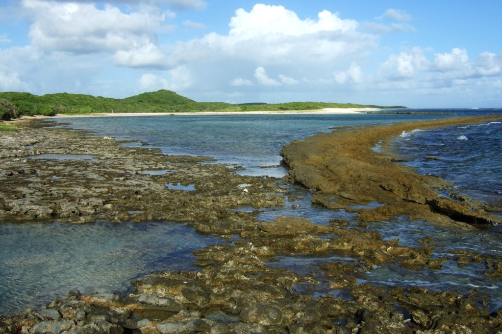 View of the lagoon where shorebirds love to rest during fall and winter