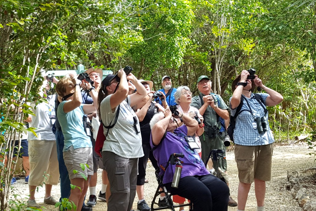 Visitors on a Carefree Birding cruise view a pair of Caribbean Doves from a trail in the park