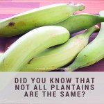Did you know that not all plantains are the same