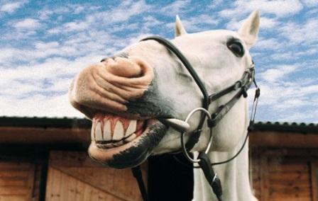 Horsemeat scandal