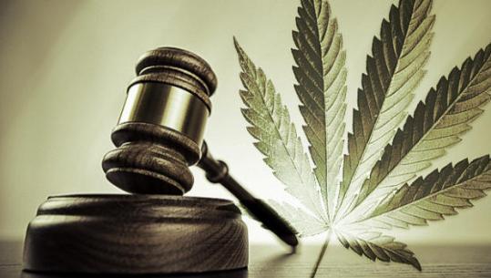 The marijuana plant threatened by the gavel. Photo courtesy www.cbsnews.com