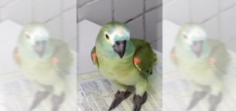 Parrot Arrested in Brazil Drug Raid