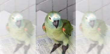 Brazil Arrest Parrot in drug raid