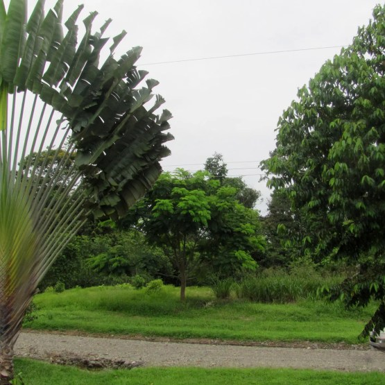 Properties in Costa Rica for Sale : Lot 50