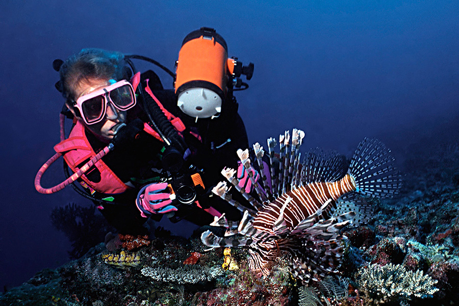 Image result for underwater photographer lionfish