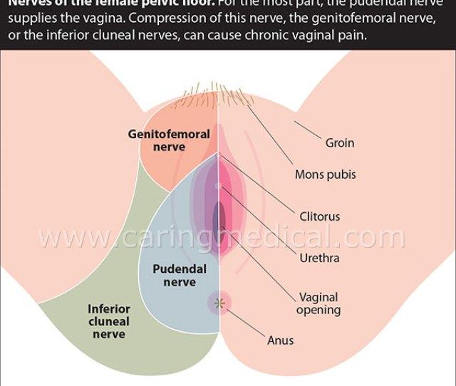 Female Pelvic Floor Nerves