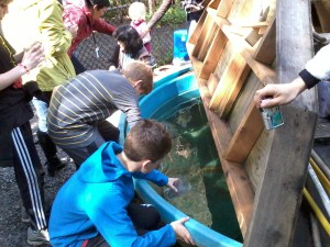 Salmon in School students deliver their fish to the Imprint Pond!