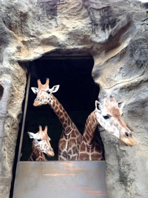 The Kardashians of the animal kingdom.