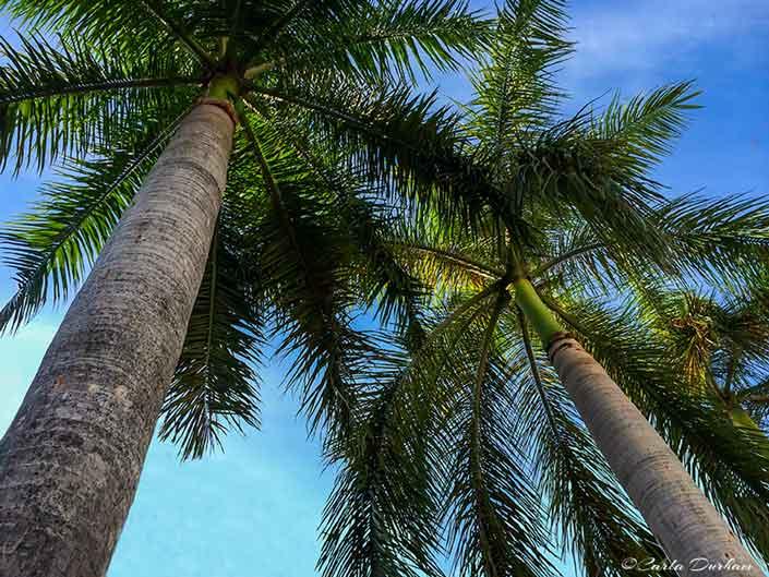 palm-trees-miami-beach-carla-durham