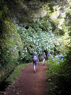 200507_Madeira 0808_2