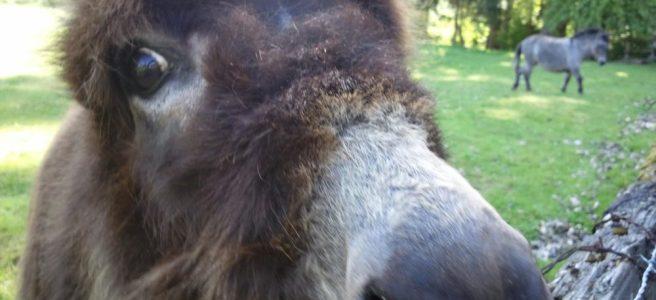 Donkey Donkey