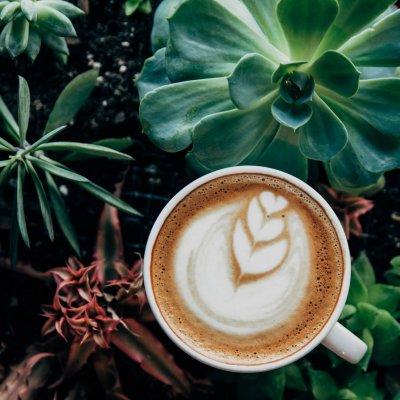 Kaffeetasse von oben, in der mit Milchschaum eine stilisierte Pflanze gezeichnet ist.