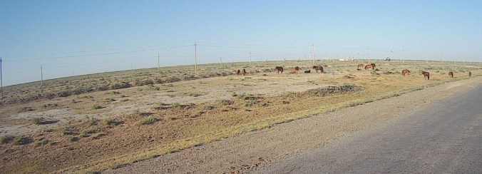 Lots of free running horses along the road.