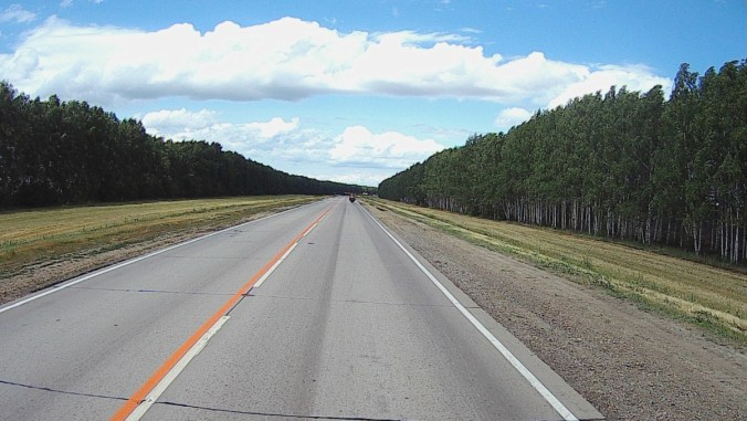 Birch trees planted on both sides of the road to stop the crosswind.