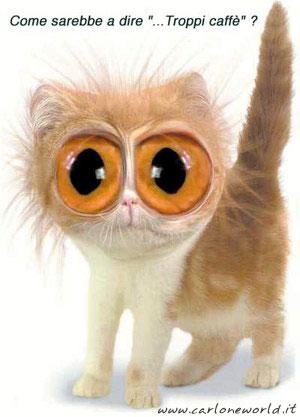 gattino occhi da fuori