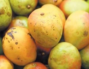 frutas-doentes