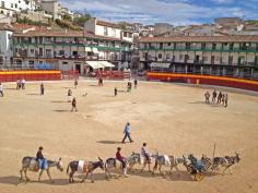 Burrotaxis en la Plaza