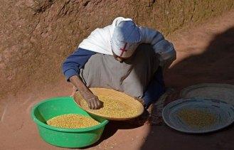 Preparando semilas