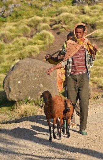 Pastor y cabra