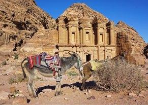 El mejor medio de transporte de Petra, el borrico