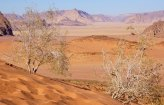 Arbustos que sobreviven en las dunas rojas