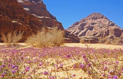 El desierto florece en marzzo