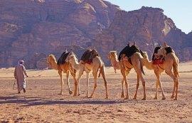El fiel, útil e inseparable camello