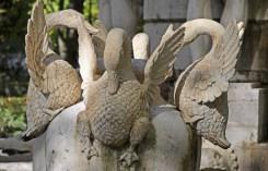 Destacan los cisnes de la base