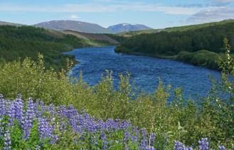 Rio y altramuces en el norte de Islandia