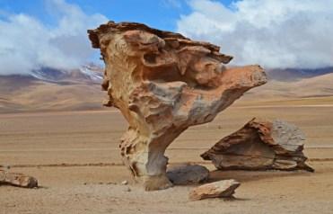 Árbol de piedra en Siloli