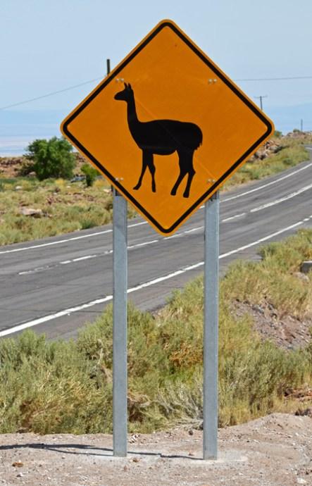 Peligro: Llamas o vicuñas
