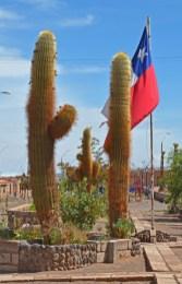 Socaire - Cardones en la Plaza de Armas