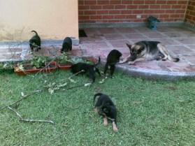 Lola y sus cachorros