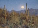 Cactus Nocturn