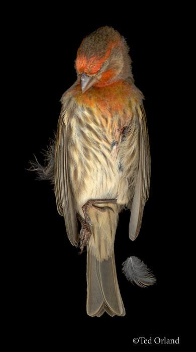 Bird ©Ted Orland