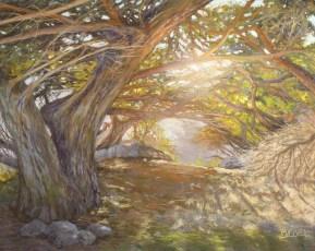 Belvel_B_Hobbit-Trail-at-Lone-Cypress