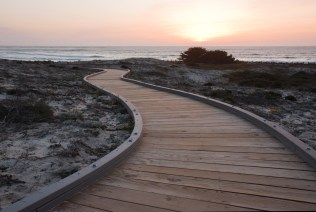 A walkway over sand dunes towards the ocean at Asilomar State Park near Pacific Grove California with with the setting sun and Monterey cypress trees (Cupressus macrocarpa) in the background. Monterey cypress is endemic to the central coast of California