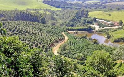 Fazenda Floresta