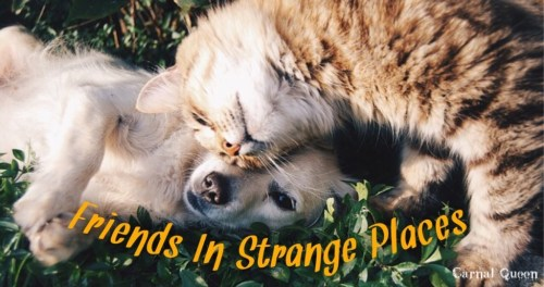 Friends In Strange Places.