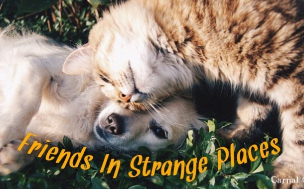 Friends In Strange Places ...