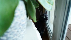 Le cancer du chat Mokaccino