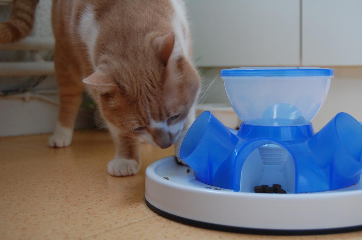 chat en surpoids comment gérer son alimentation avec la gamelle tunnel cat feeder de Trixie