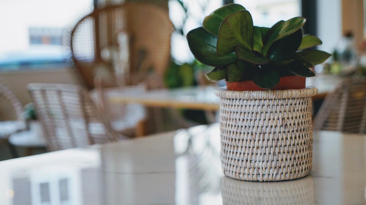 plante dans un cache pot en paille