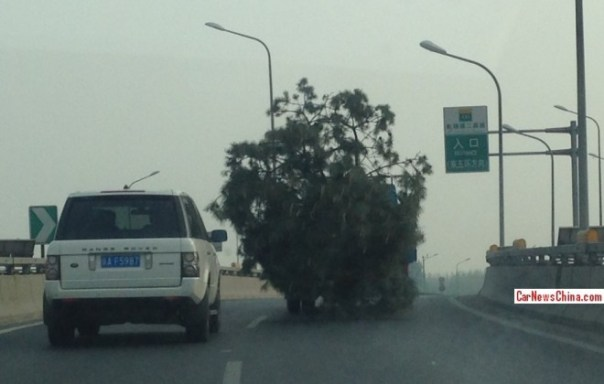 Tree on the Move on the Road in China