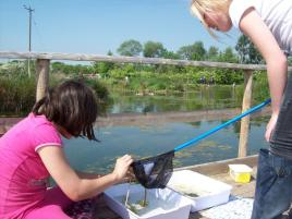 Pond dipping at our wildlife pools